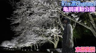 京都賞櫻2018 龜岡運動公園 在地人的櫻花私房景點