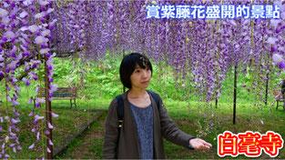 【日本旅遊】賞紫藤花盛開的景點・白毫寺