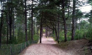 forêt-flore-fleur-nature-baie-de-somme-picardie-hauts-de-france