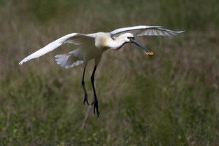 faune-oiseaux-nature-baie-de-somme-hauts-de-france