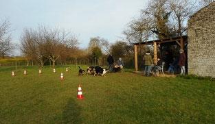 Plusieurs chiens autour de leur maître lors d'une séance de coaching canin sur le terrain de coach canin 16 éducateur canin à angoulême