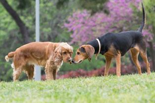 Nach einem ersten gemeinsamen Spaziergang kann man sich auf einem gut gesicherten Gelände auch frei kennenlernen.