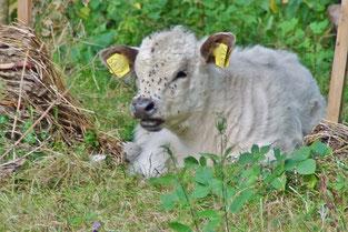 Rinderkids fühlen sich im Naturgebiet wohl