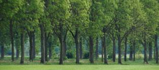 Grüne Alleen