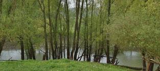 Zwei Teiche bieten vielen Wasservögeln einen natürlichen Lebensraum
