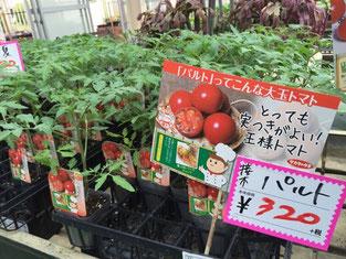 大玉トマトの中でも栽培に挑戦しやすい「パルト」