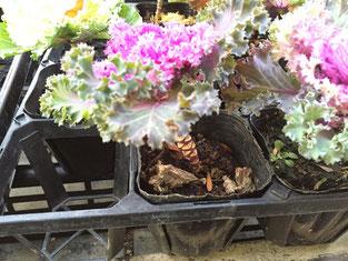葉っぱをかきわけて、土や根にお水を