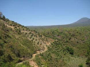 ウルアパンを中心に広がる自然豊かな園地