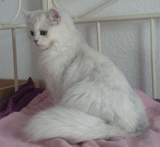 Sissy, fast 12 Monate alt