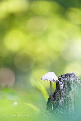 Kleiner Pilz im Goldtaler-Wald