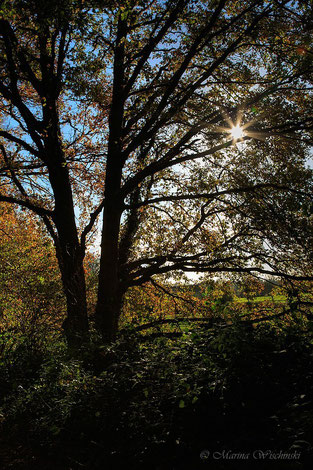 Herbstlicher Sonnenstern