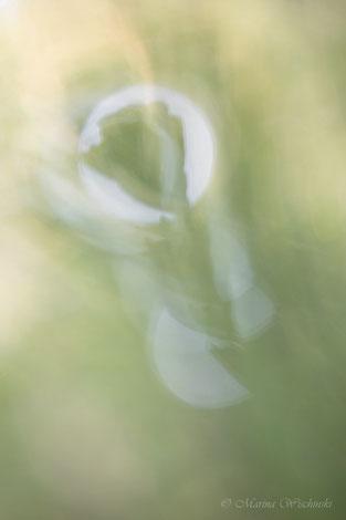 Silhouette einer vertrockneten Pflanze im Licht