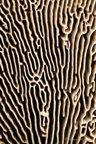 Detailaufnahme einer Pilzstruktur