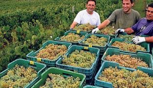スペイン、ワイン生産量世界No.1に (www.vinetur.com)