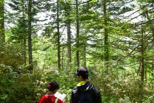 長期観察林付近の森