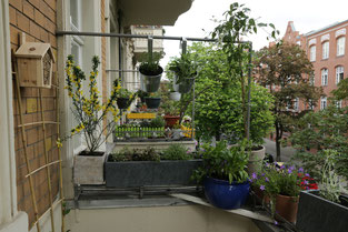 Insektenfreundlicher Balkon