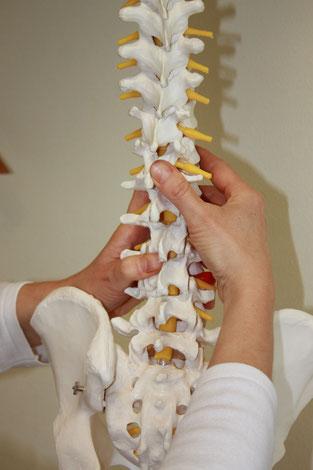 Wirbelsäulentherapie nach Dorn-Breuß in der Naturheilpraxis Irene Behr