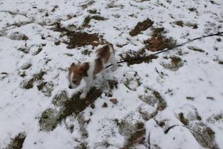 Kabou erforscht den verschneiten Park.