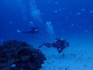 石垣島でのんびりダイビング「癒しの砂地」