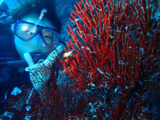 石垣島でのんびりダイビング「イソバナと私」