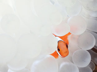 石垣島でのんびりダイビング「白ハマ」