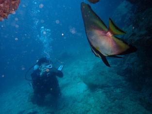 石垣島でのんびりダイビング「アカククリと水中写真」