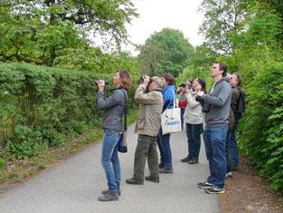 Wo sind Schwarzspecht und Halsbandschnäpper? Die Gruppe übt sich im Erkennen der Stimmen und Sichten der Vogelarten.