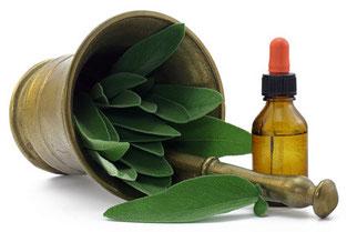 Die Kraft der Pflanzen nutzen - mit der Phytotherapie