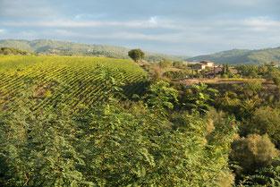 Weinberge im Chianti