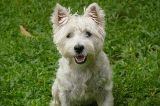 Hundeparfum Hundephysiotherapie Heike Amthor in Leipzig Stötteritz,