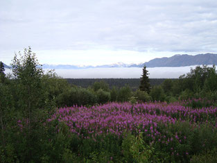 mietwagenreise alaska