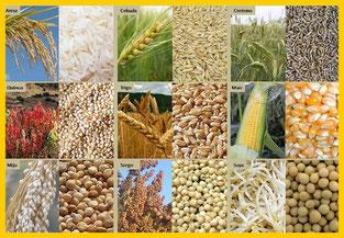Cereales Alimentación Nutrición Dietas Herbolario Alquimista Arrecife Lanzarote