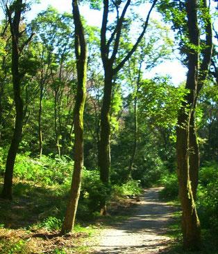 生駒の山道