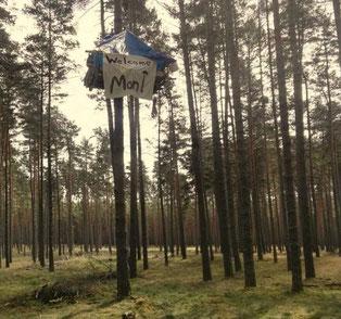 """1. Baumbesetzung an der A14 bei Seehausen von """"Wald statt Aspalt"""" am 24.04.2021, c Wald statt Aspalt"""
