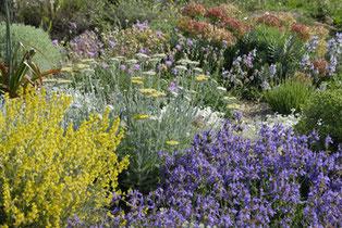 jardin sec; Filippi