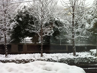 診察室の窓からの雪景色・・・雪かきの好きな私は朝一で雪かき☃