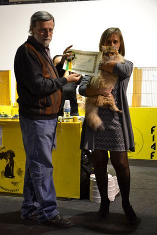 allevamento gatto siberiano Terre del Nord
