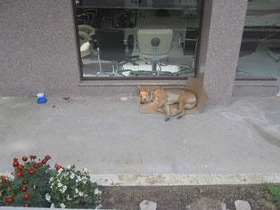 Toby lebte lange auf der Straße.