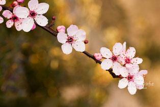 Tips voor het fotograferen in de lente, bloesem