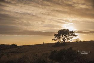 Alleenstaande kale boom bij zonsondergang