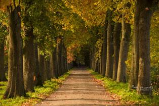 Tips voor het fotograferen in de herfst.