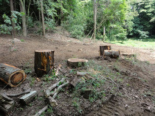 切株はテーブルベンチに 森の休憩所