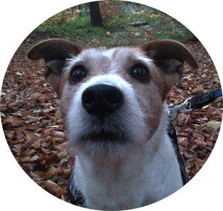 ARO Hundetraining