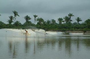 Surfing a Tidal Bore ('pororoca') of the Rio Mearim River, Brazil.