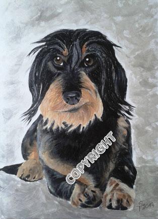 Hundeporträt:   Rauhaardackel liegend. Hund schaut den Betrachter an. Sichtbar graubrauner Kopf mit blonder Schnauze sowie Vorderpfoten, linke Hinterpfote und Rute, Tiermalerei, gemalte Tierportraits nach Fotovorlage, Tiere zeichnen lassen