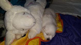 Chiana mit Ihrem Schaf beim schlaf ;-)