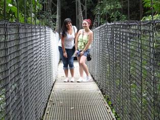 Caminatas por senderos y puentes colgantes