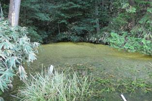 鏡池(心県の池)