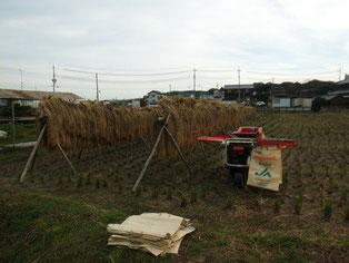 嵐の前の静けさ。脱穀準備完了。