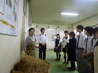 この藁が、笹沼五郎商店の「わらっと納豆」になる?